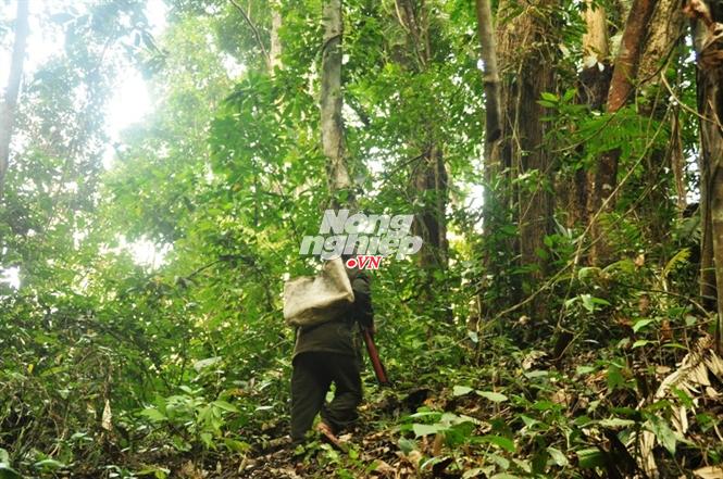 Hồ Văn R. nghe ngóng tìm thú rừng