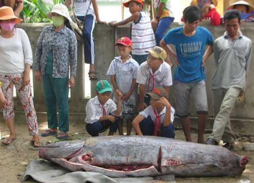 Ngư dân xã An Mỹ, huyện Tuy An bất ngờ khi bắt được cá lạ