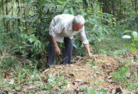 Ông Nhởn bên mộ ông nội