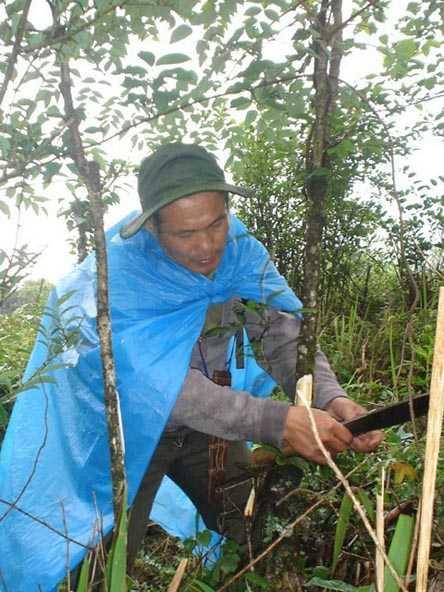 Ông Lâm tự hái thuốc trong rừng