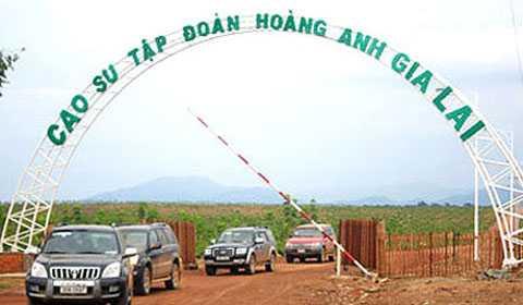 Nông nghiệp sẽ thành ngành đóng góp chính trong cơ cấu doanh thu của HAGL