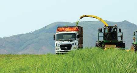 Bà chủ TH True Milk Thái Hương cho biết sẵn sàng đầu tư vào Tây Nguyên nếu có được quỹ đất đủ lớn và kết nối được giao thông.