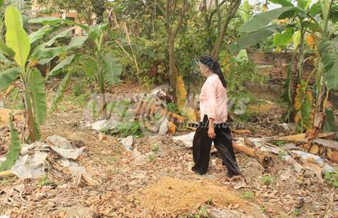 Dấu vết khu vườn bị gia đình bà T. đào bới nham nhở tìm kho báu