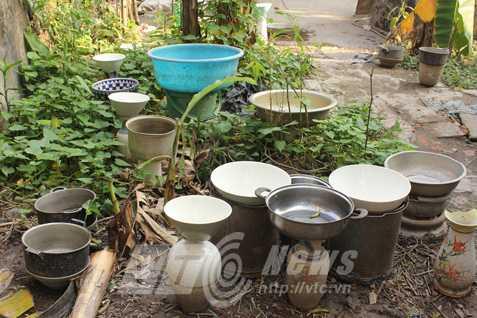 Nhà thơ Nguyễn Đăng Hành giăng chậu bát khắp vườn để hứng nước mưa pha trà. Ảnh: Dương Phạm Ngọc
