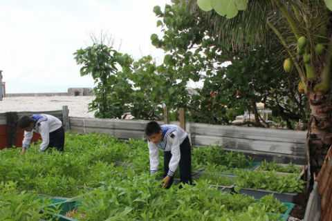 Rau xanh là phần thưởng hiếm hoi của đất liền cho lính đảo ngày 2/9.