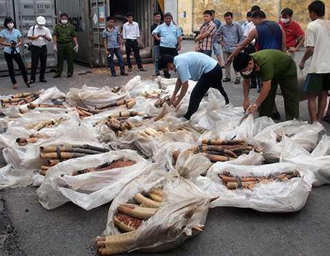 Hơn 10 tấn ngà voi đã được Cục Hải quan Hải Phòng phát hiện, bắt giữ chỉ trong mấy năm gần đây