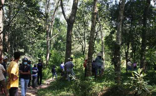 Khu vực rừng tràm nơi phát hiện xác thanh niên treo trên cây cây