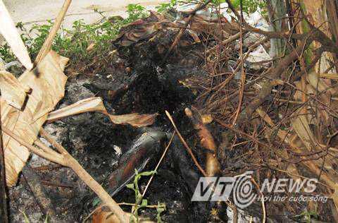 Bụi chuối nơi phát hiện thi thể người phụ nữ bị đốt