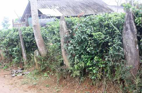 Người dân thôn Đồng Mùi lấy đá trong mộ về làm hàng rào