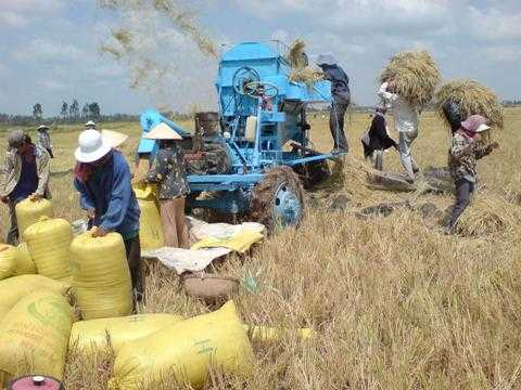 Giá trịxuất khẩu gạo năm 2014 ước đạt 3,62 tỷ USD