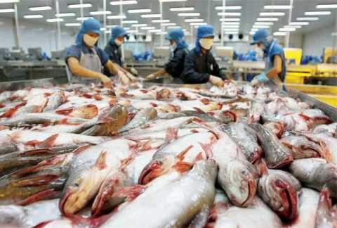 Tổng giá trị xuất khẩu mặt hàng cá tra cả năm 2014 sẽ đạt khoảng 1,8 tỷ USD
