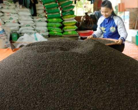 Khối lượng xuất khẩu tiêu cả năm 2014 vào khoảng 158.000 tấn với giá trị 1,2 tỷ USD
