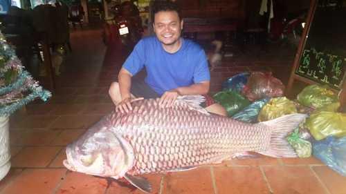 Con cá hô được ngư dân ở Đồng Tháp bắt được