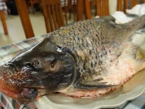 """Cá Anh Vũ: 2,9 triệu đồng/kg Từng được phong """"Văn Lang đệ nhất ngư"""" và nằm trong top những sản vật bắt được phải tiến cống, cá Anh Vũ có mức giá khá cao. Mỗi con cá Anh Vũ từ 2 kg trở xuống có giá 1,4 triệu/kg, từ 5 kg/con trở lên có giá 1,6 triệu/kg. Cá Anh Vũ chỉ sống ở nơi nước xiết, nên thịt rất săn chắc lại có tính ôn, có thể chữa các bệnh nóng nhiệt, táo bón và bồi bổ thận, hoàn. Cũng vì sống ở vùng nước xiết, nên cá có cái miệng cực khoẻ để bám vào vách đá, hàng giờ cạo rêu đá ra ăn nên miệng bành ra như mõm lợn. Nếu như gà Đông Tảo hay gà chín cựa giá trị nằm ở bàn chân, thì cái miệng rộng, trông như """"mõm lợn"""" của cá Anh Vũ là bộ phận được giới sành ăn đánh giá cao. Theo những ngư dân lão luyện, cái """"mõm lợn"""" ấy chính là bộ phận ngon nhất và đắt nhất của cá anh vũ -Ảnh: Đại Lộ"""