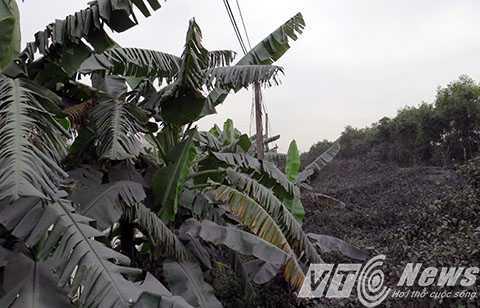 Bụi than phủ khắp xóm làng, ảnh hưởng đến sức khỏe và đời sống của người dân- Ảnh MK