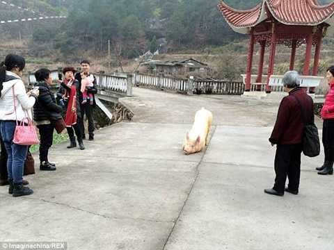 Nhiều người hiếu kỳ đứng xem chú lợn quỳ gối trước cổng chùa- Ảnh: Sina