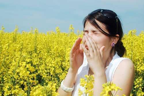 Mùa xuân, phấn hoa phát tán khá nhiều trong không khí gây ngứa mũi, hắt xì hơi, chảy nước mũi liên tục, nghẹt mũi rất khó chịu. (Ảnh: internet)