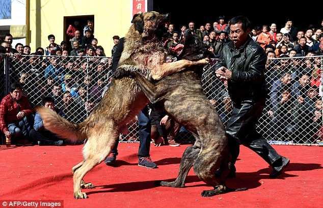Bất kỳ ai mang chó đến đều có thể tham dự