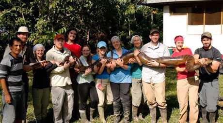 Kích thước khủng khiếp của loài rắn Anaconda