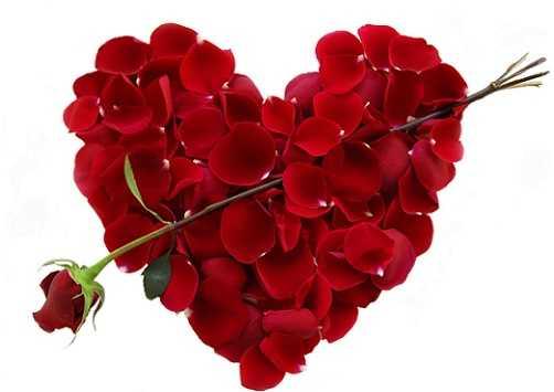 Hoa hồng là một vị thuốc thơm mát, không độc.