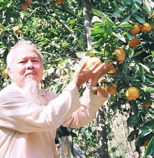 Ông Trần Thanh Tùng cùng trang trại quýt hồng. Ảnh: Tấn Kiên-Trọng Bình
