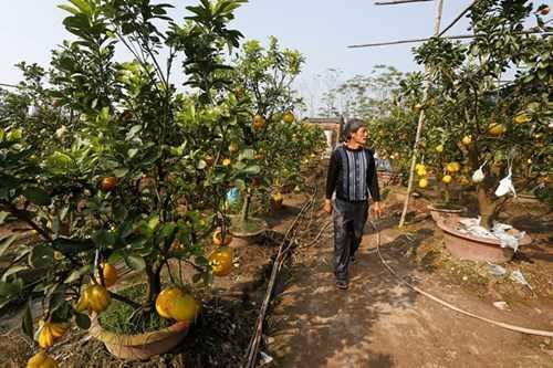 Vườn cây cho 5, 7, 9 loại quả trị giá bạc tỷ của ông chủ Lê Đức Giáp. Ảnh: Lê Hiếu