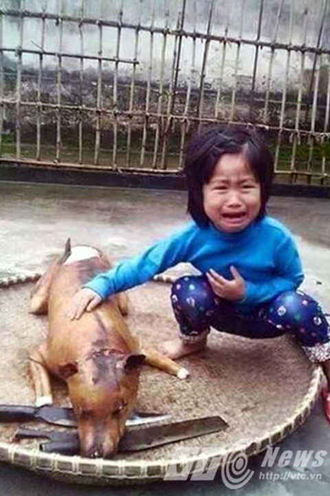 Bức ảnh bé gái bên chú chó bị giết thịt 'gây bão' trong cộng đồng mạng những ngày qua