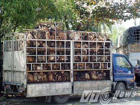 Hàng nghìn cá thể chó bị buôn lậu phải trải qua hành trình dài trong những chiếc lồng chật hẹp. (Ảnh: Animal Asia)