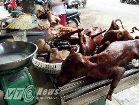 Những chú chó thường bị giết hại bằng cách dùng gậy sắt hoặc sống dao đập vào đầu (Ảnh: Animal Asia)