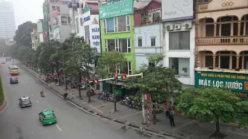 Hàng cây đều và thẳng này trên phố Nguyễn Chí Thanh chuẩn bị được thay thế đồng loạt.
