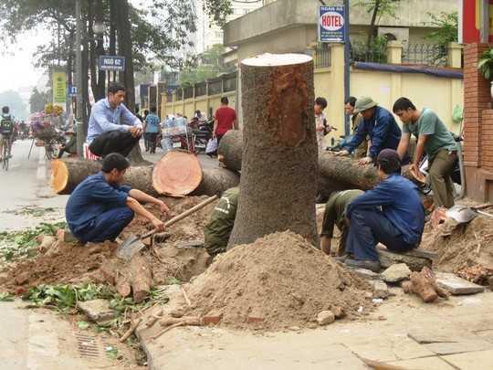 Thanh tra Chính phủ lên tiếng vụ chặt hạ, thay thế 6.700 cây xanh