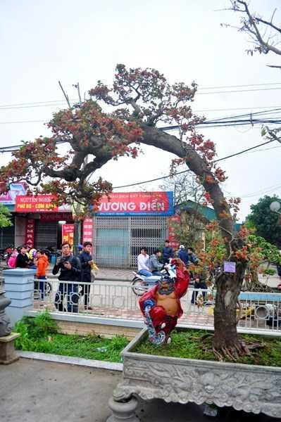 Nằm trong chương trình trưng bày triển lãm cây cảnh nghệ thuật ở chùa Nành, xã Ninh Hiệp (Gia Lâm, Hà Nội), cây dâu tằm của ông Chu Mạnh Hùng đang được rất nhiều người dân đến xem bởi sự độc và lạ của nó.