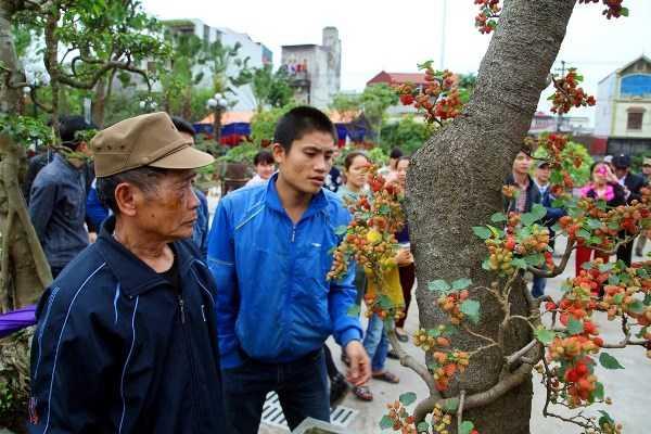 Rất đông người dân khu vực và người dân đi trảy hội chùa Nành đã ghé vào thăm và không ngớt lời khen dành cho cây dâu dáng lão cực độc này.