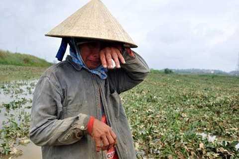 Nước lũ cuốn trôi hàng chục ha dưa hấu vào vụ thu hoạch khiến nông dân Đại Lộc (Quảng Nam) điêu đứng (Ảnh: Internet)