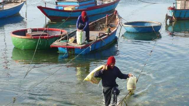 Ngư dân tại Lý Sơn, Quảng Ngãi thu nhập khá cao từ đánh bắt cua huỳnh đế. Ảnh: NVCC.