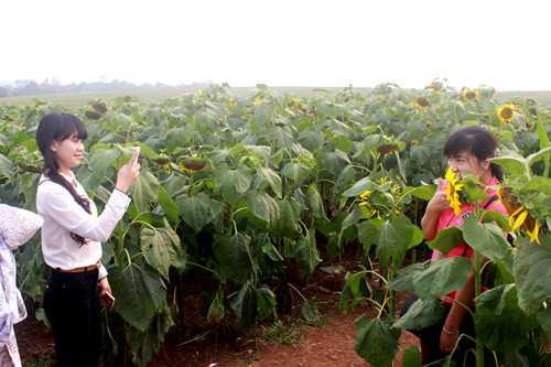 Hai thiếu nữ này đã vượt cả trăm km để có được những tấm ảnh cùng hoa hướng dương