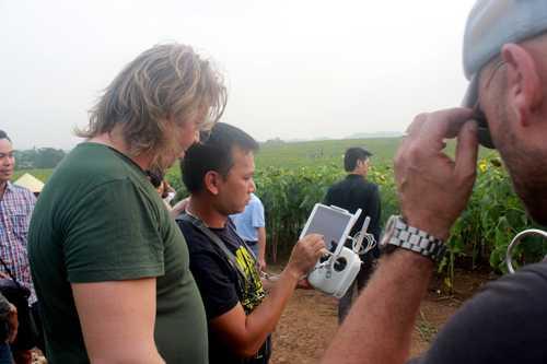 Đem cả Fly Cam vào cánh đồng hoa hướng dương ở Trang trại bò sữa TH để quay phim từ trên cao
