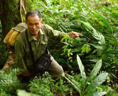 Ông Lâm phải tự vào rừng hái thuốc, gieo trồng cây thuốc quý