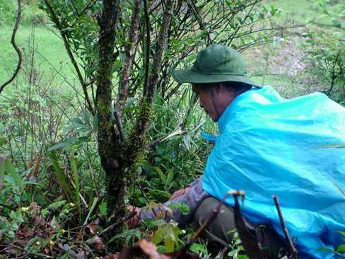 Ông Lâm tự lấy thuốc trong rừng