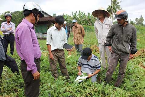 Ngày 12/4, nhóm kết nối đã đến với bà con xã Tịnh Trà (huyện Sơn Tịnh, Quảng Ngãi) để cùng địa phương lo đầu ra cho nông dân trồng dưa địa phương