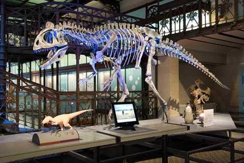 Hóa thạch thời tiền sử