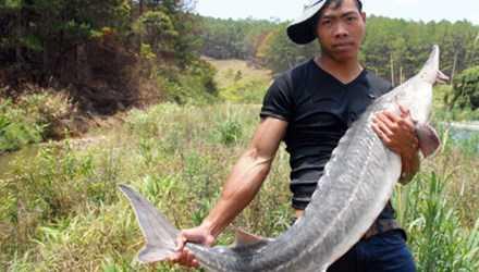 Cil Múp Ha Quyên và con cá tầm 'dựng chuyện'