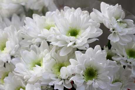 Đi tảo mộthường nên chọn các loại hoa màu trắng thuần khiết.