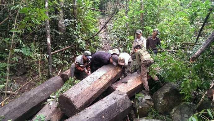 Hình ảnh khai thác gỗ lậu mà Lộc