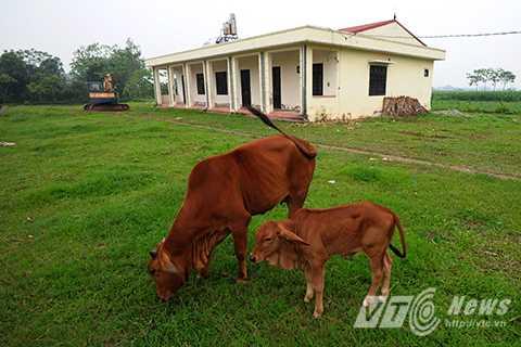 Và trở thành bãi chăn nuôi động vật của người dân sống xung quanh khu vực