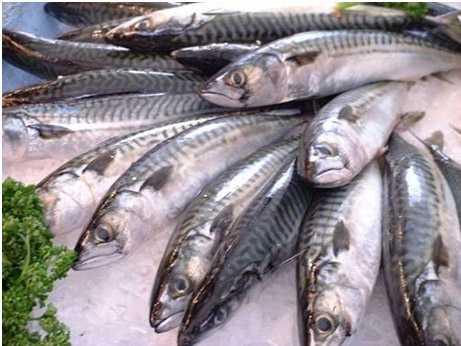 Cá là một trong những món ăn ngon, bổ dưỡng được dùng trong các bữa cơm gia đình.