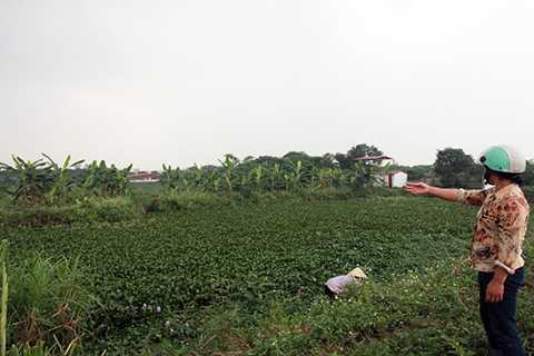 Khu vực bãi bồi xảy ra việc buông lỏng quản lý đất đai, dẫn đến mâu thuẫn, đòi hỏi quyền lợi trong nhân dân