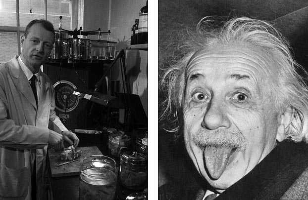 Nhà nghiên cứu bệnh học Thomas Harvey (ảnh trái, chụp năm 1955) được tin là đã trích lấy trái phép bộ não của Einstein, đem thái lát nó và gửi cho các chuyên gia nghiên cứu bệnh học thần kinh nổi tiếng trên thế giới. Ảnh: Getty Images/APIC