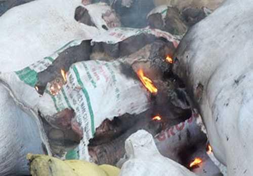 Số thịt thối bị đổ xuống hố tiêu hủy nhưng chưa hoàn tất đã được