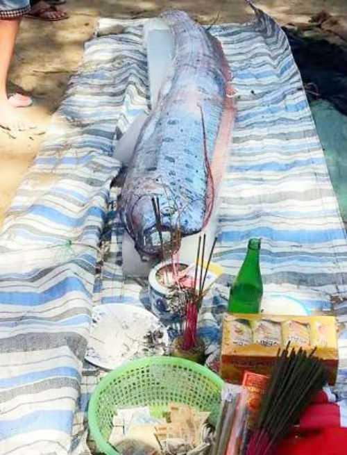 Con cá lạ dài hơn 3m, trọng lượng 30kg